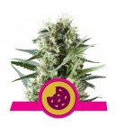 Royal Cookies - ROYAL QUEEN SEEDS