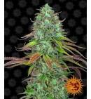 LSD Auto - BARNEY'S FARM