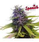 AutoBlueberry - SPANISH SEEDS