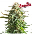 Super Skunk AUTO - SPANISH SEEDS