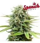 Super Bud AUTO - SPANISH SEEDS