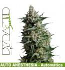 Anesthesia AUTO - PYRAMID SEEDS