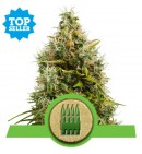 Royal AK Automatic - ROYAL QUEEN SEEDS