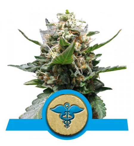 Royal Medic - ROYAL QUEEN SEEDS