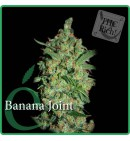 Banana Joint - ELITE SEEDS