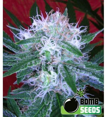 Auto Bomb - Bomb Seeds